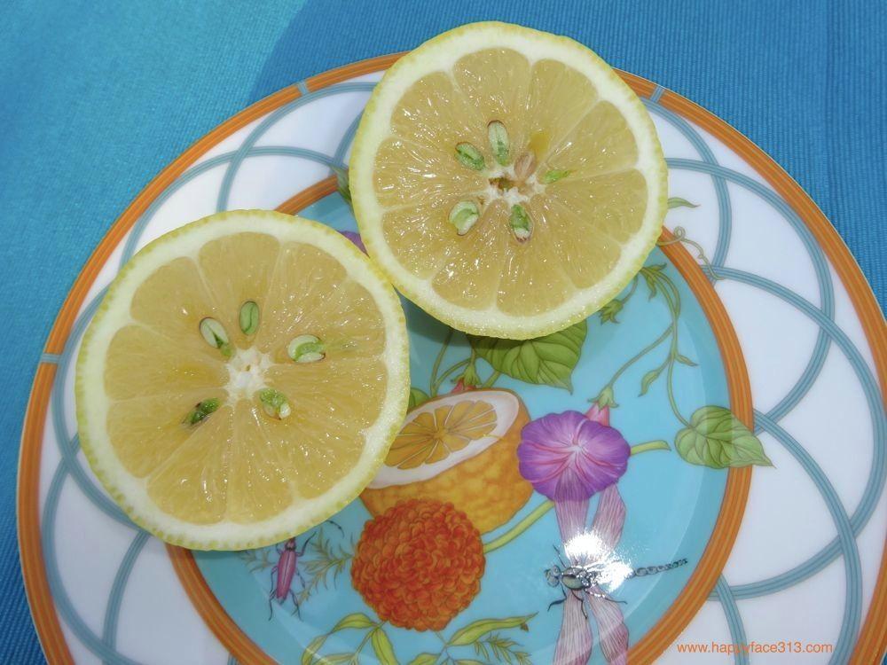 HappyFace313 If Life Gives U Lemons Hermès Siesta Island 7