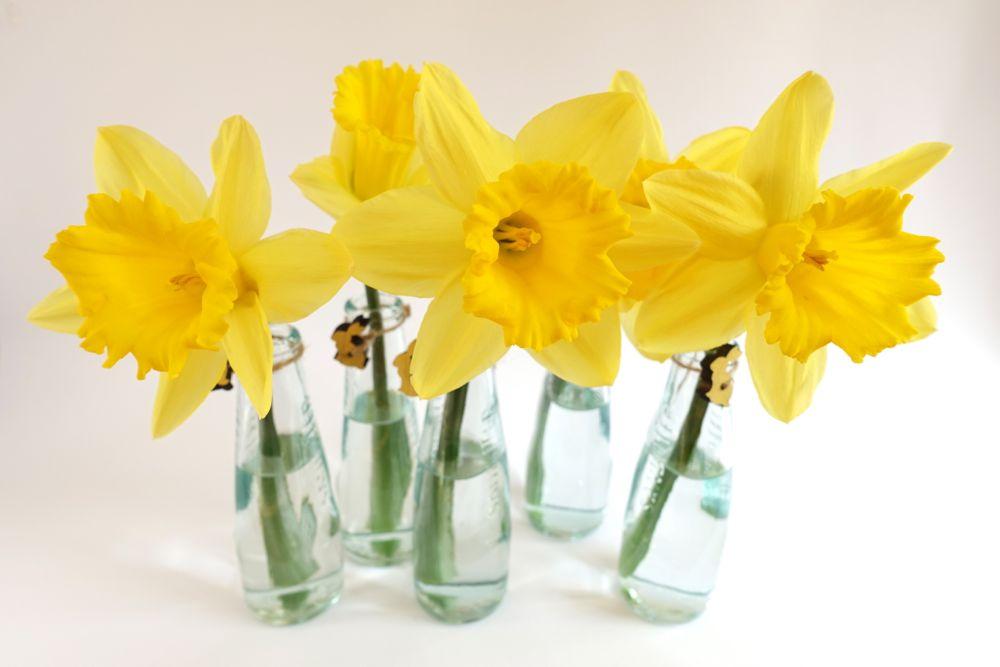 HappyFace313-daffodils-Narzissen-6