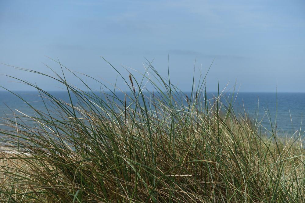 HappyFace313-düne-seegras-dune