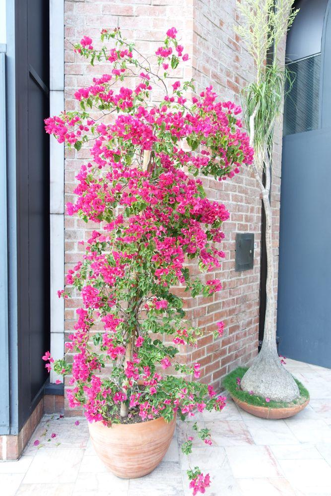HappyFace313-Beverly-Hills-16