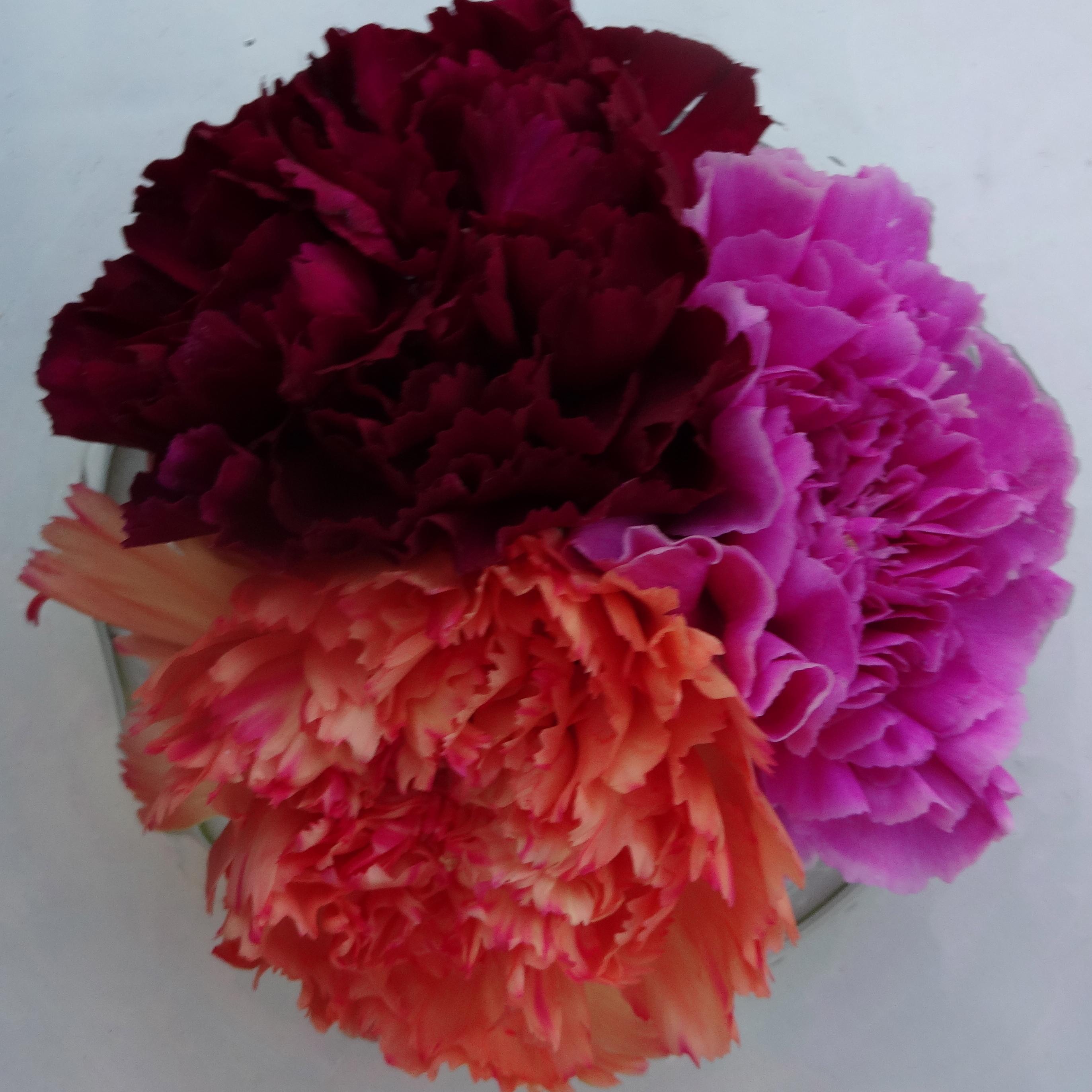 Nelken / carnations
