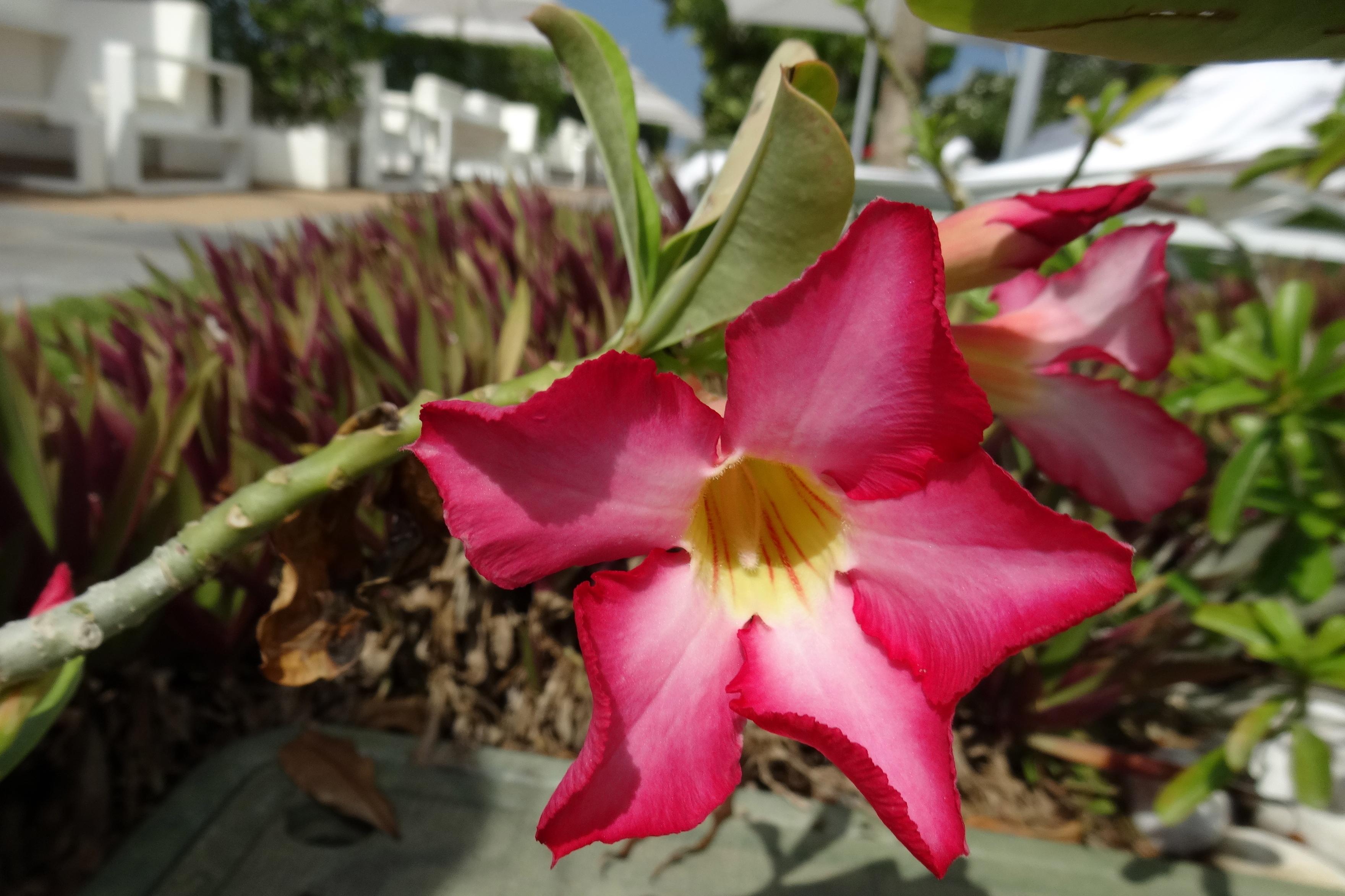 flowers in the garden / Blumen im Garten