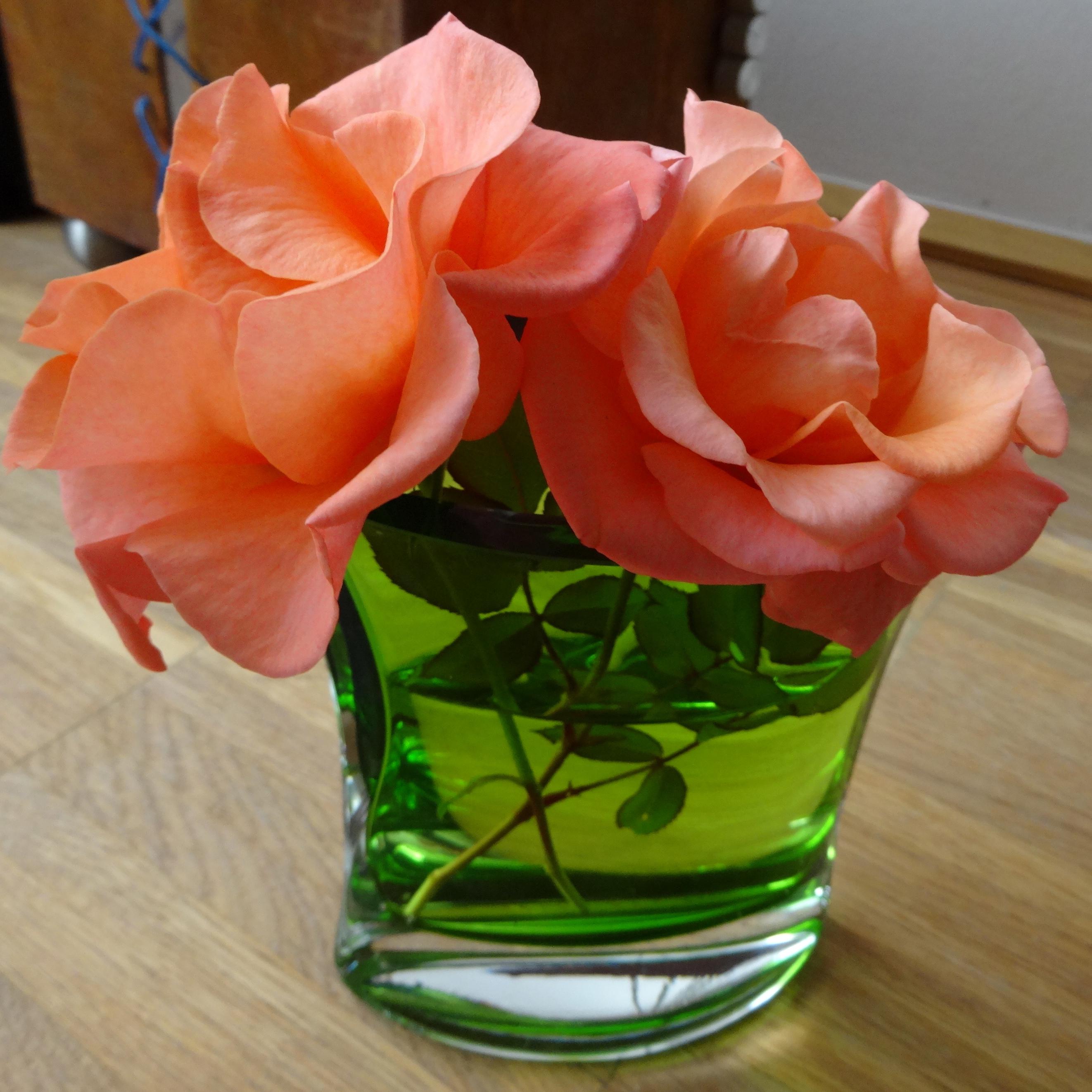 November roses / Rosen