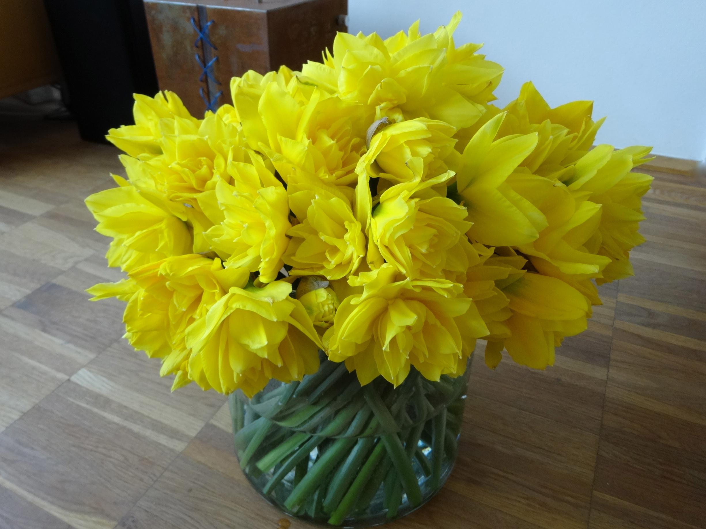 DSC03470 Osterglocken Daffodils Narzissen 4 HappyFace313