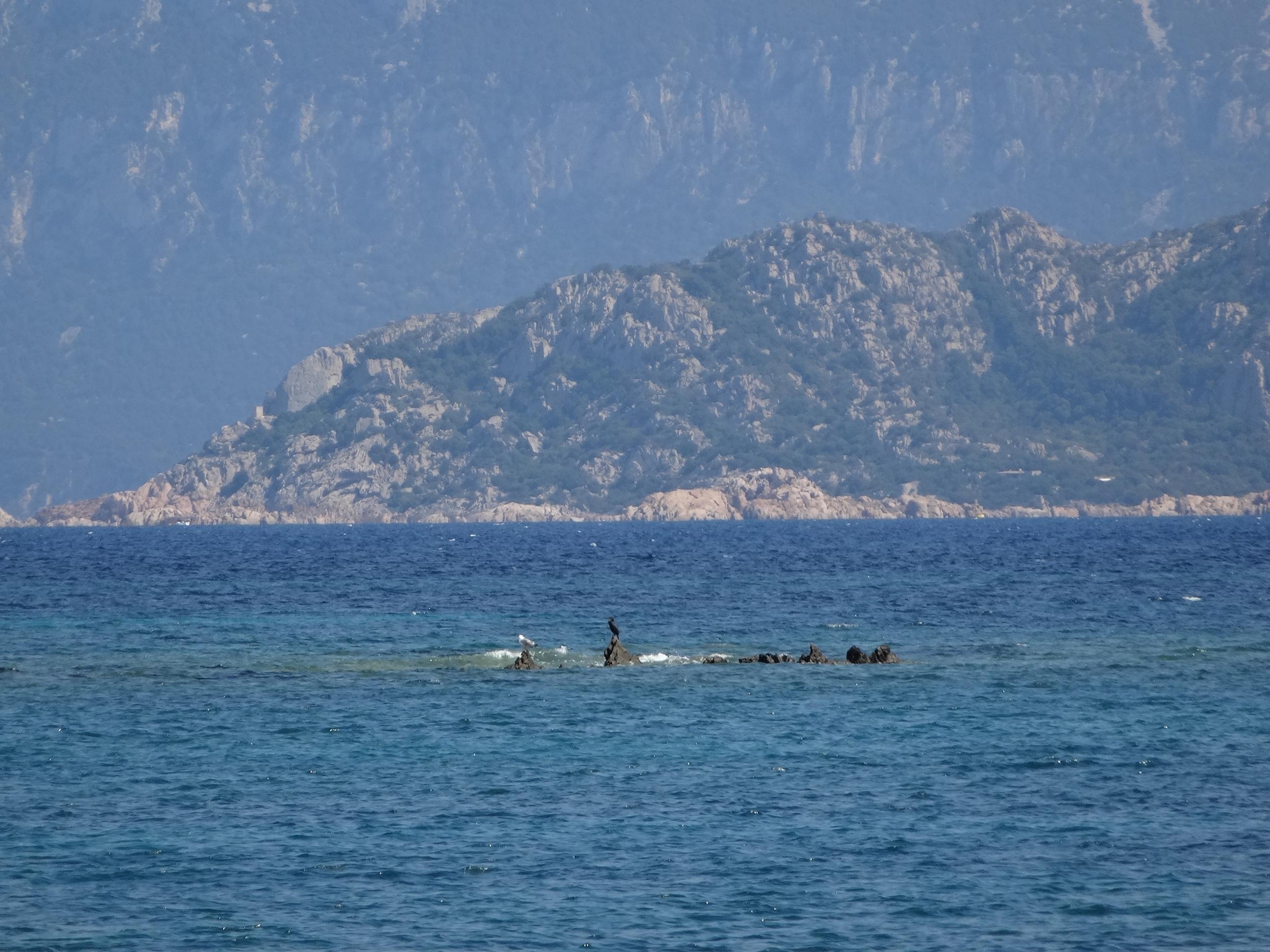 HappyFace313-depth-Sardinia