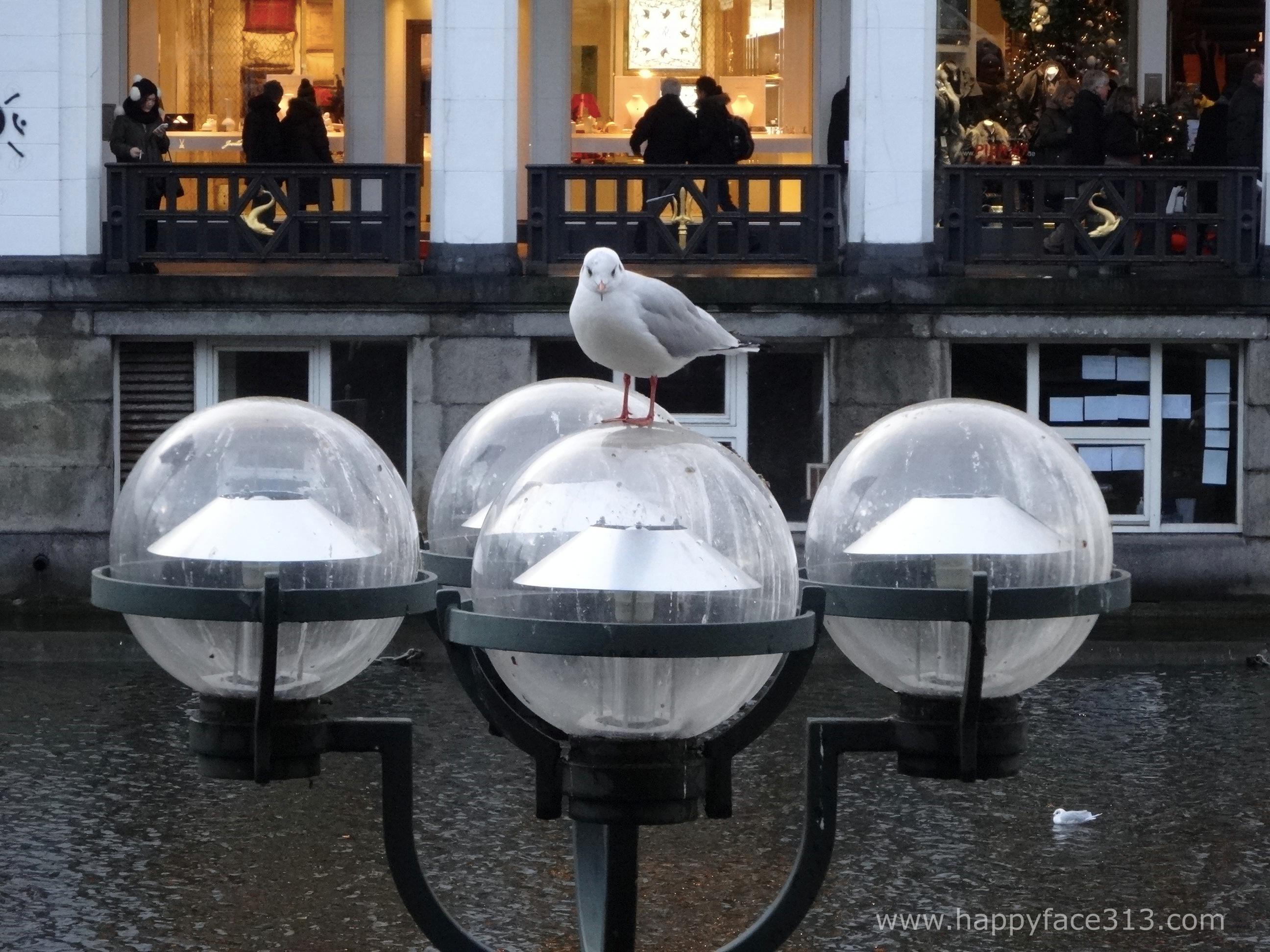HappyFace313-seagull-serenity