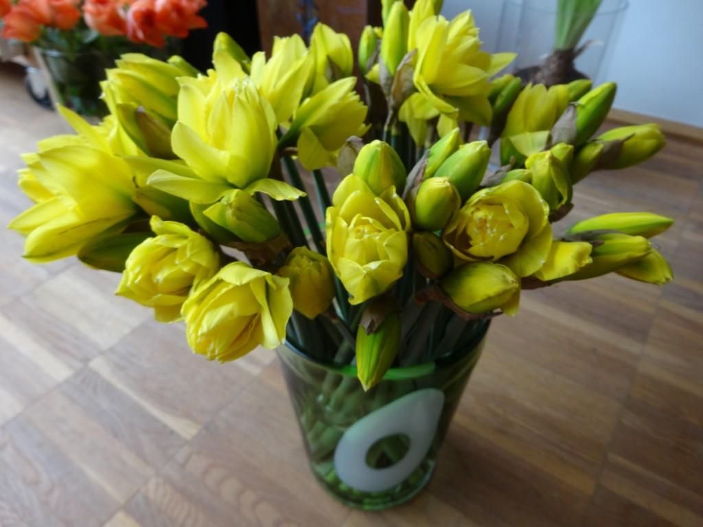 daffodils / Osterglocken