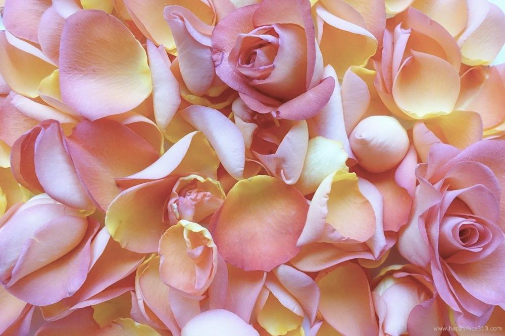 HappyFace313-Rose-Rosenblätter-petals-1
