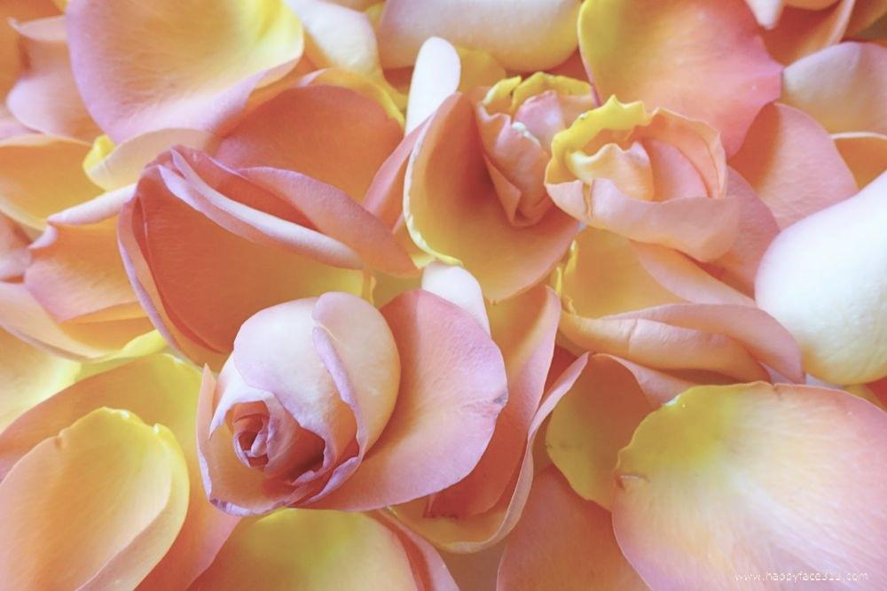 HappyFace313-Rose-Rosenblätter-petals-3