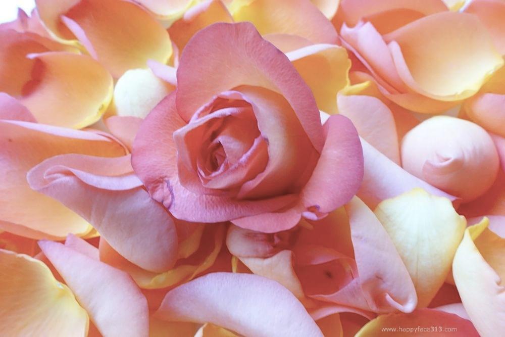 HappyFace313-Rose-Rosenblätter-petals