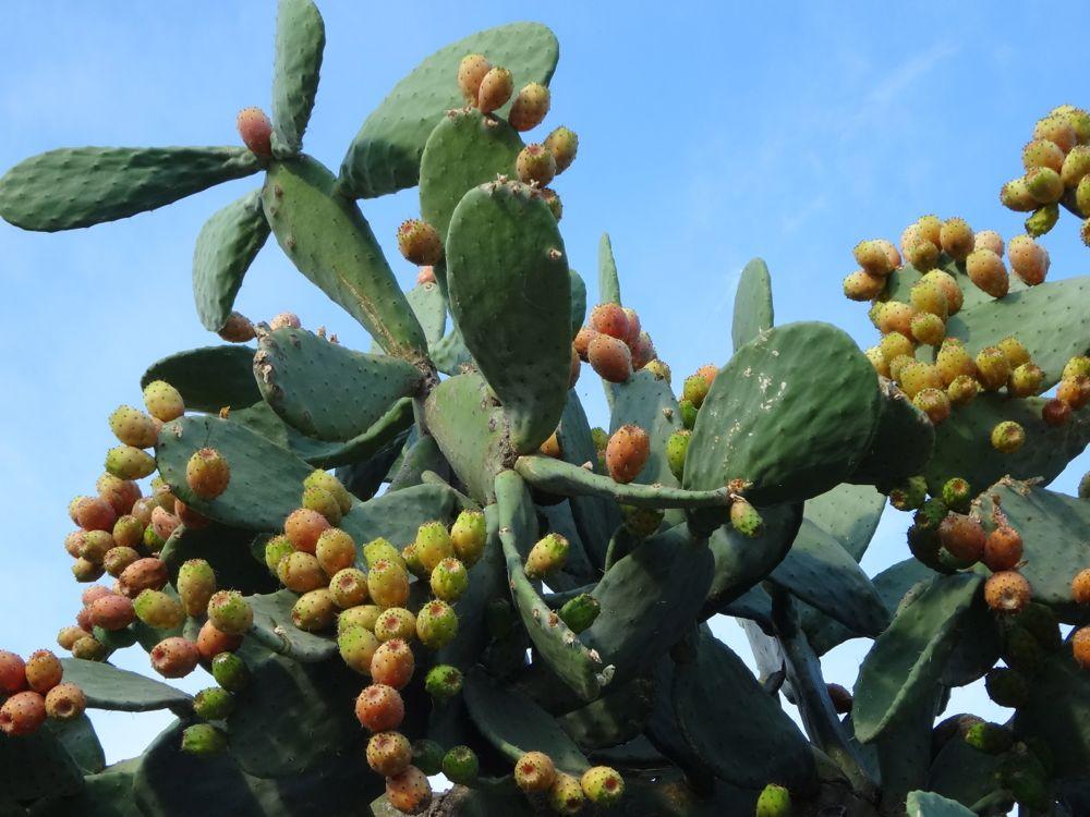 HappyFace313-Kaktus