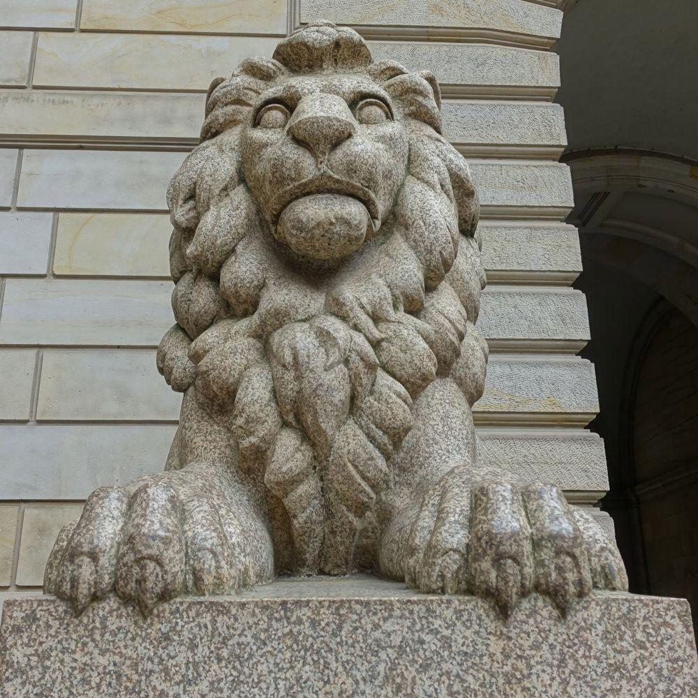 ferocious lion / grimmiger Löwe