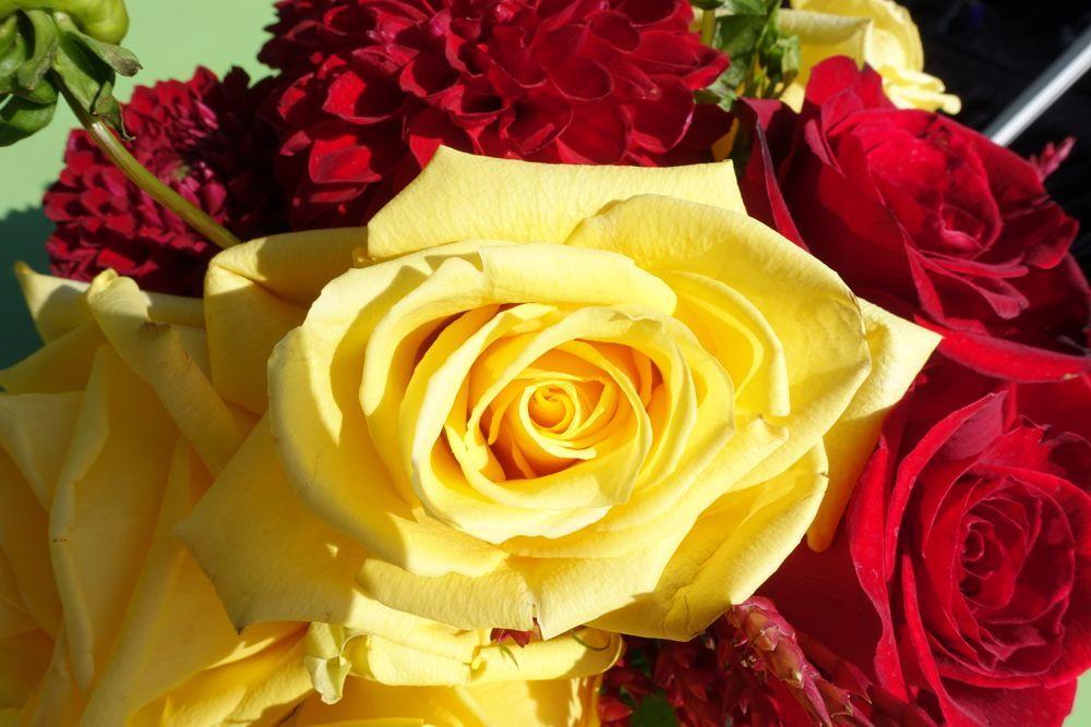 HappyFace313 yellow rose