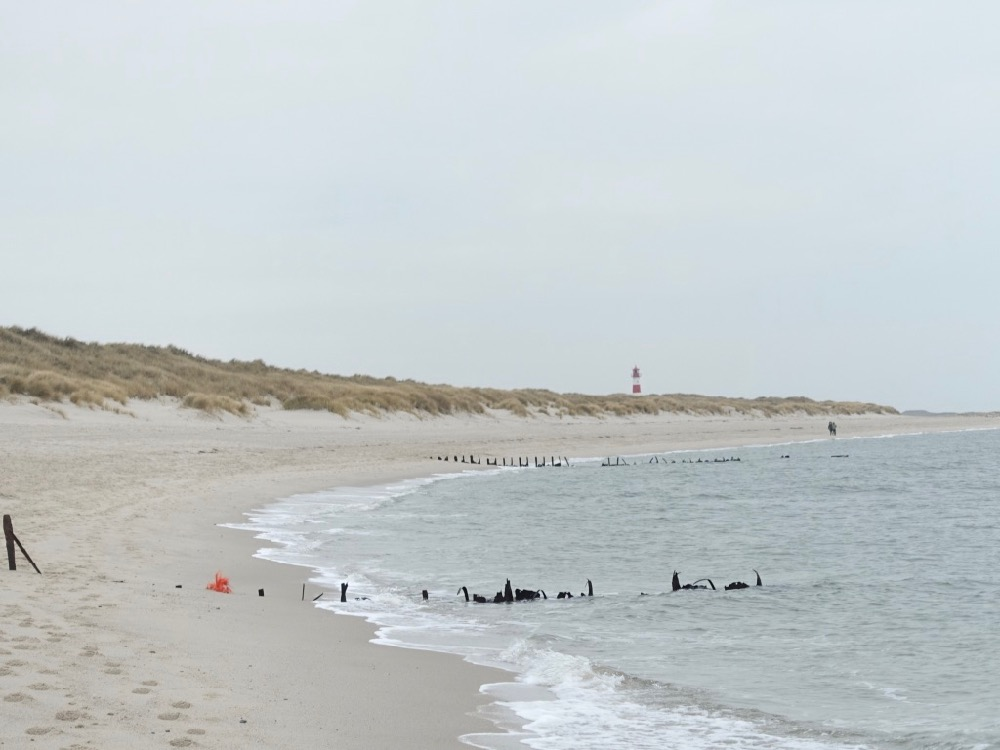 HappyFace313 Sylt Besuch